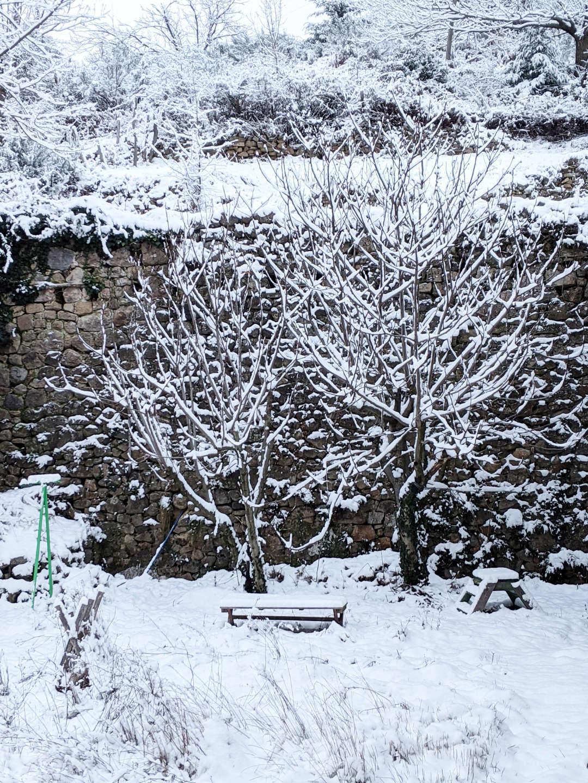 Neige dans mon jardin